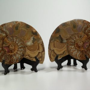Ammonite fossil pair – extra large Fossils ammonite fossil pair