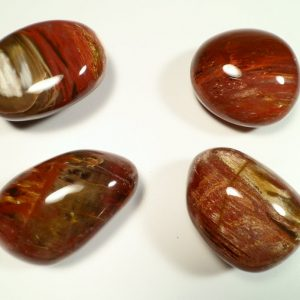 Petrified Wood pebble All Gallet Items [tag]
