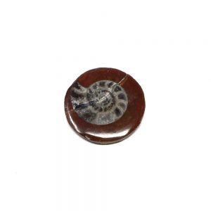 Ammonite Polished Button Fossils ammonite