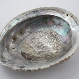 Abalone Shell Accessories abalone