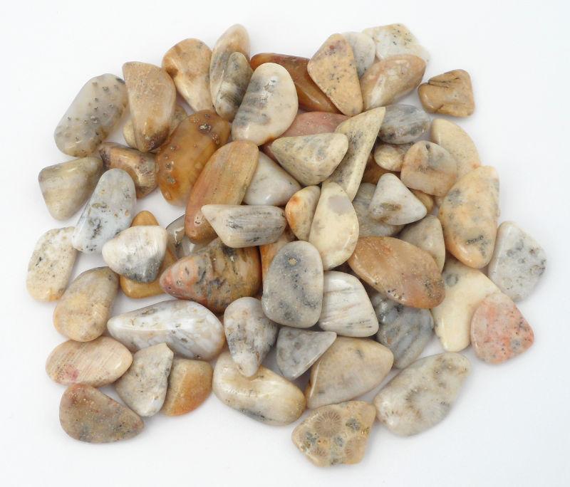 "Coral, Agatized, ""B"", tumbled, 8oz All Tumbled Stones agatized coral"