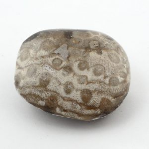 Petosky Stone Fossils fossil