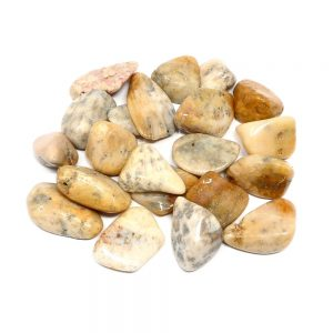 Coral, Agatized, tumbled, 8oz All Tumbled Stones agatized coral