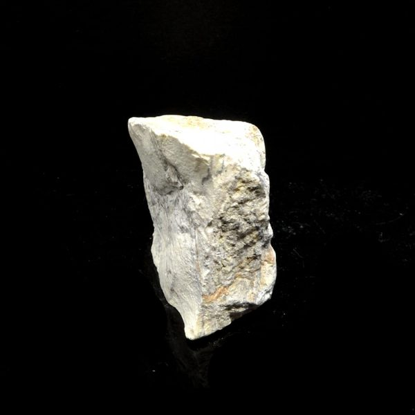 Archean Butterstone Fossils archean