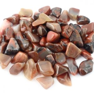Petrified Wood, tumbled, 8oz All Tumbled Stones petrified wood