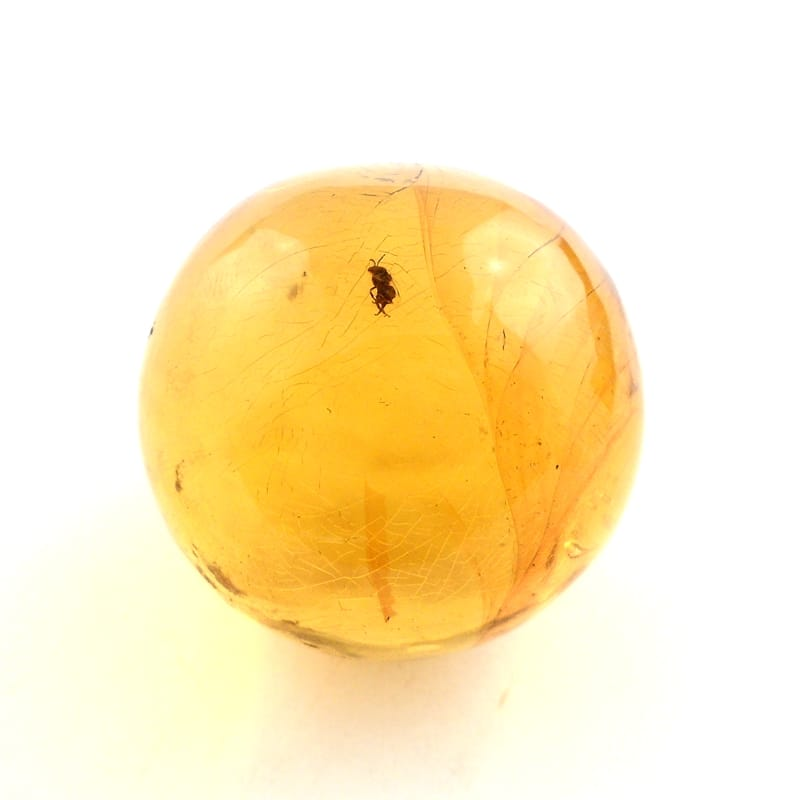 Baltic Amber Sphere with bug All Polished Crystals amber