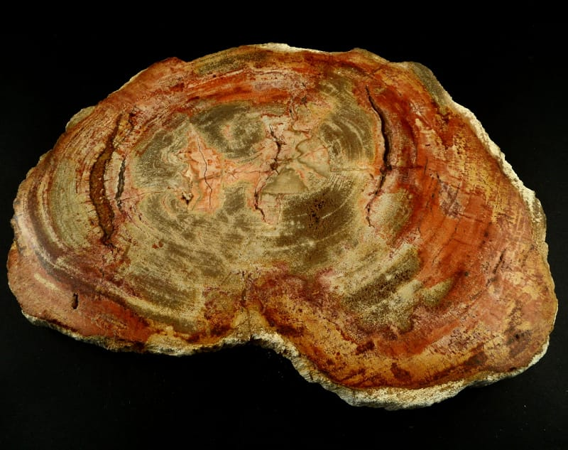 Petrified Wood Slice All Gallet Items
