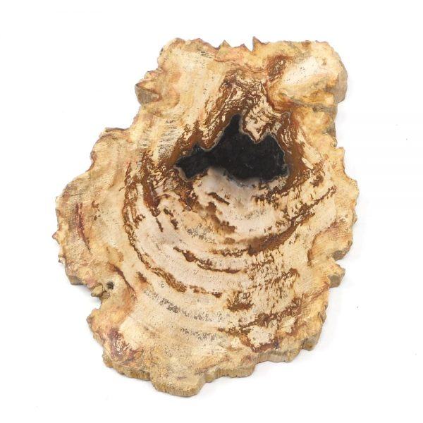 Petrified Wood Slice All Gallet Items fossilized wood