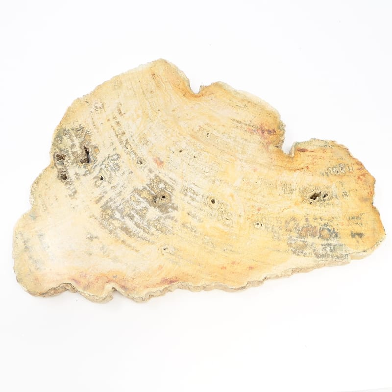 Petrified Wood Slice All Gallet Items petrified wood