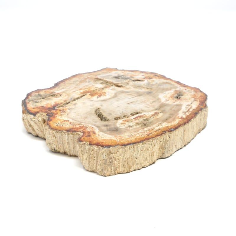 Petrified Wood Slice All Gallet Items petrified wood