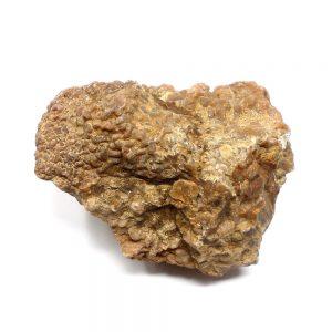Coprolite Specimen Fossils coprolite