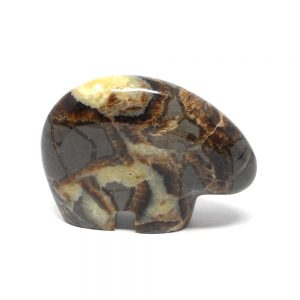 Septarian Bear All Specialty Items bear