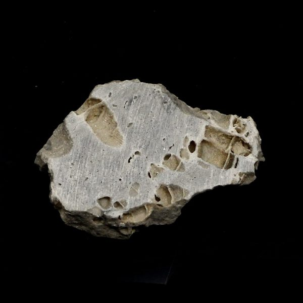 Fossilized Coral Slab All Gallet Items coral