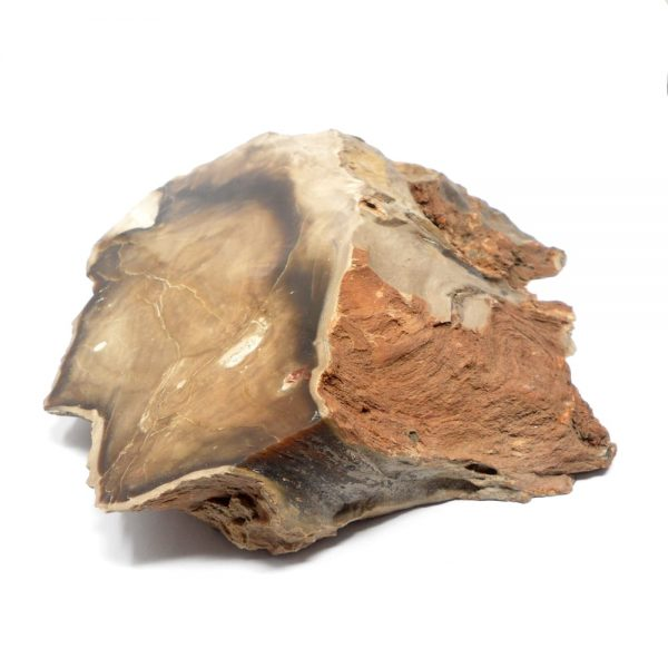 Petrified Wood Slice All Raw Crystals fossilized wood
