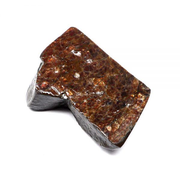 Canadian Ammolite Fossils alberta