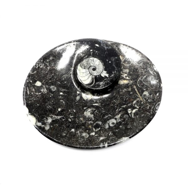 Orthoceras Fossil Bowl All Specialty Items bowl