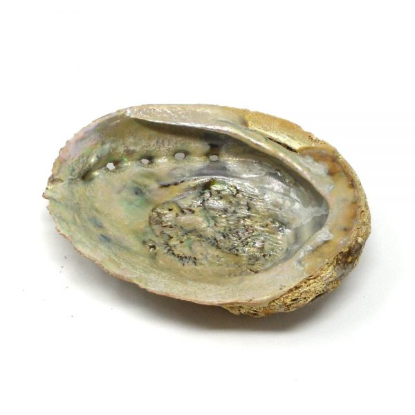 Abalone Shell md Accessories abalone
